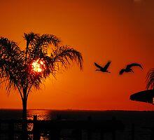 Orange Sunset  by LudaNayvelt