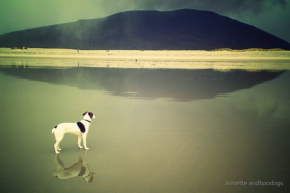 small dog, big weather by annette andtwodogs