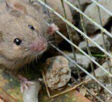 Help Me - I'm Stuck - Mouse - NZ Sticker