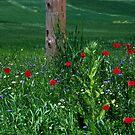 Spring I by Vivi Kalomiri