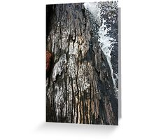Weathered by water Greeting Card