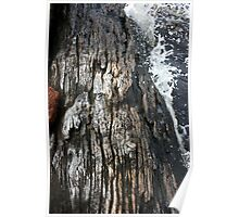 Weathered by water Poster