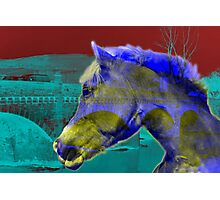 Horse Power - Old and New Photographic Print