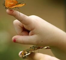Little Hands And Butterflies by CarolM