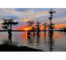 Cypress Silhouettes in St. Martin Parish Photographic Print