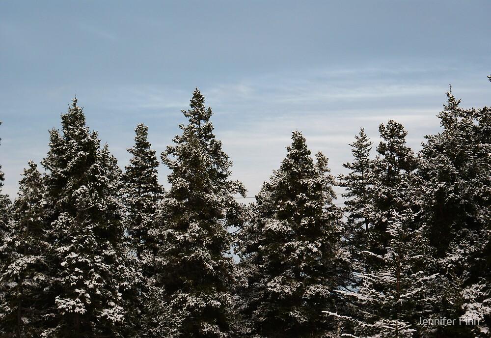 Winter trees by Jennifer Finn