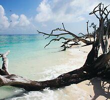 Tree on Lady Shores by John Donatiu