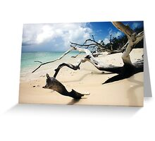 Dead Wood in the Sand Greeting Card