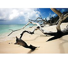 Dead Wood in the Sand Photographic Print