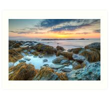 Sunrise at Sachuest Point Wildlife Refuge  Art Print