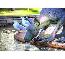 Kangaroos In The City 2 - Perth WA - HDR Photographic Print