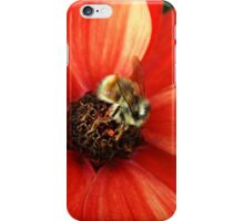 Bumble bee on orange flower iPhone Case/Skin