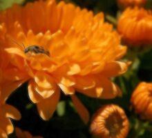 Lady Bug Orange by Kay  G Larsen