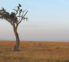 Masai Mara plains with vultures and zebra. by Mel1973