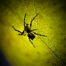 The spider that sat down beside her (take two series) by David Petranker
