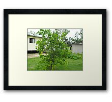 Kaffer Lime Framed Print