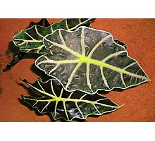 My Tropical Houseplant Photographic Print