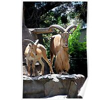 Billy & Me. Adelaide Zoo Poster