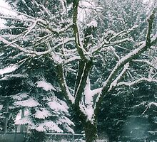 natures true beauty by MorganAshley
