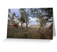 Longhorn - Monkhouse Road, Woodside, South Australia Greeting Card
