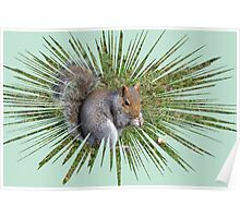 Grey Squirrel............ Poster
