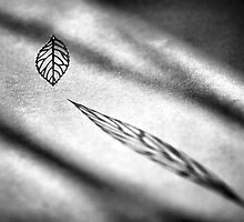 A Leaf by Paul McCartney by Paul Louis Villani