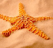 Starfish by Roger Otto