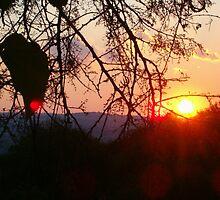 Majestic Sunset  by laureenr