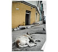 Sleeping dogs lie... Poster