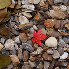 Tiny red leaf by Allison Peters