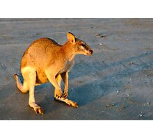 wallaby sunrise Photographic Print
