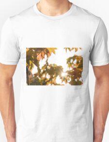 Acer leaves 2 T-Shirt