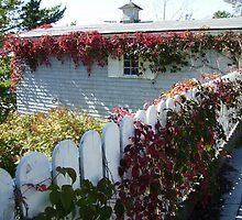 White / Purple Picket Fence - Lunenburg, Nova Scotia, Canada by Jessica Bawden