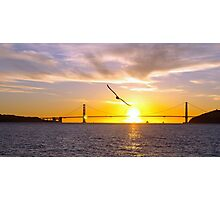 Golden Gate - Seagull Photographic Print