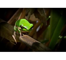 Frog Diving  Photographic Print