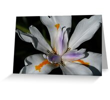 Lilly White Blossom Greeting Card