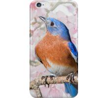 Bluebird in Spring iPhone Case/Skin