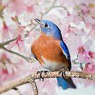 Bluebird in Spring by Bonnie T.  Barry