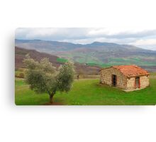 Olive Tree and Old Hut in Tuscany  Canvas Print