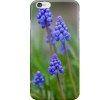 Grape Hyacinth (Muscari) iPhone Case/Skin