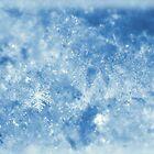 Winter Blues by PamelaJoPhoto