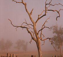 Colorful Australia © Vicki Ferrari Photography by Vicki Ferrari