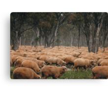 Droving Sheep at Albert  © Vicki Ferrari Photography Canvas Print
