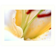 White Cream Delicate Lily Flower with Burgundy Red Stamen Art Print