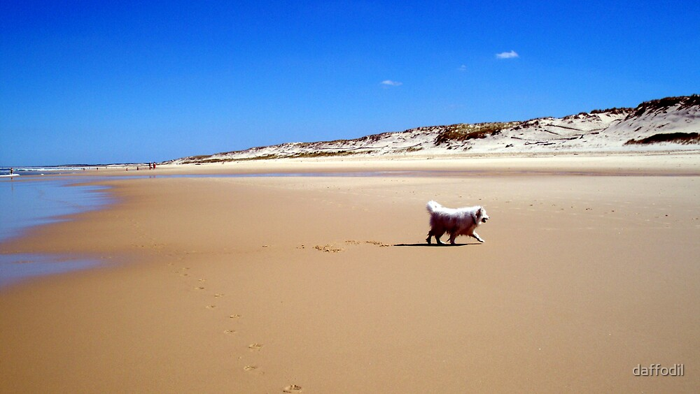 Dog on the beach by daffodil