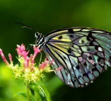 Heavenly Butterfly by Bonnie T.  Barry
