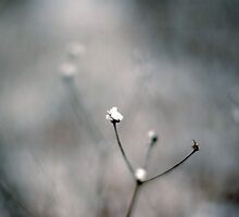 Snow Catchers by Amanda Keaton