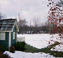 A tree in the snow at the back yard by Ilan Cohen