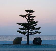 Zen - Beach Bonsai by Jackson Chu