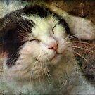 I'm Lovin it 'cat'  by vigor